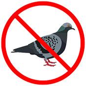 pigeon control Las Vegas NV