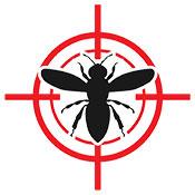 bee extermination Las Vegas
