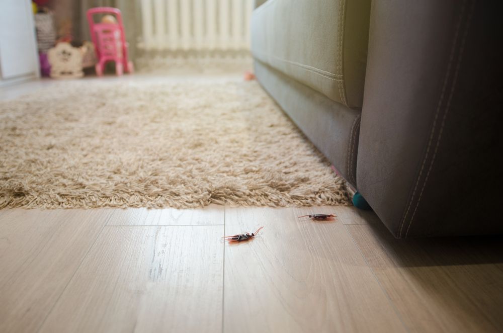 dead roaches in a home's living area
